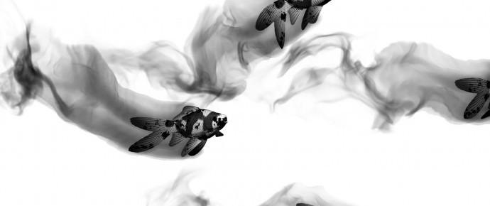 Turbulence FD Tutorial Preview: Ink/Smoke Trail